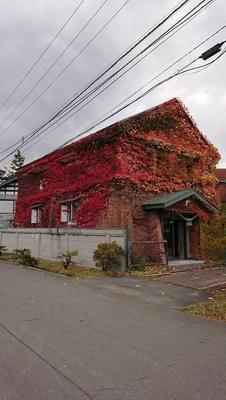 紅葉が綺麗な季節♬